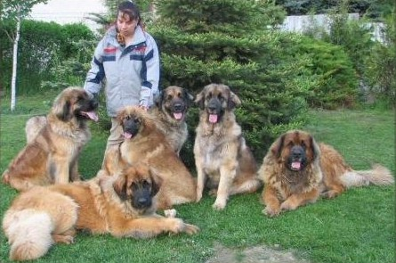 Bilder Blumengarten löwe blumengarten kennel national association of leonberger