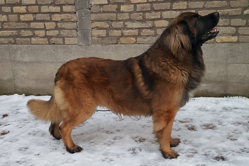 Luca-Guard Forever Bruno