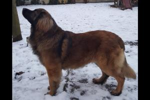 Luca-Guard Forever Bruno1