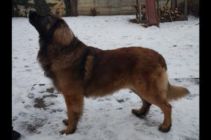Luca-Guard Forever Bruno2