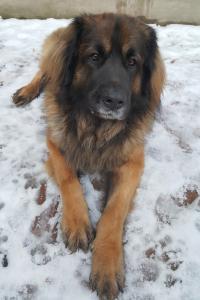 Luca-Guard Forever Bruno6