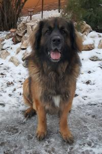Luca-Guard Forever Bruno8
