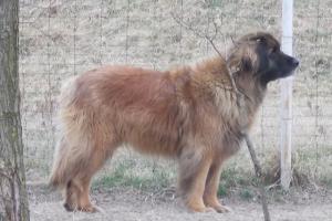 Medvebergi Maszkos Amy1